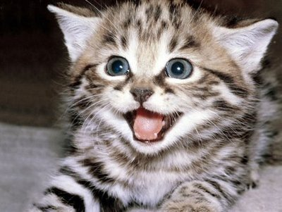vacunar-gatos